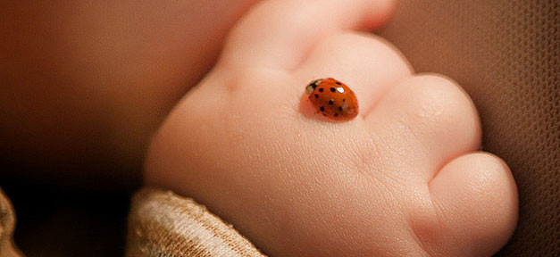 Baby, Kind, Marienkäfer, Hand, Neugeborene, Kinder, Geburtenrate