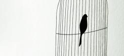 Vogel, Gefängnis, Käfig, Freiheit, Gefangen