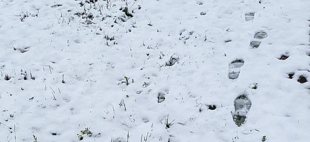 Winter, Schnee, Fußstapfen, Kälte, Kalt