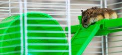 Hamster, Hamsterrad, Käfig, Haustier, Tier
