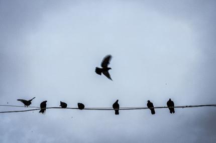 Vögel - Türkei © Mirza Odabaşı