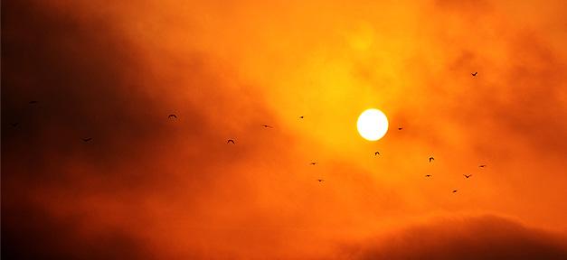 Sonne, Sonnenuntergang, dämmerlicht, vögel, himmel