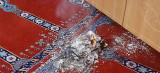 Unbekannter verübt Brandanschlag auf Hagener Moschee