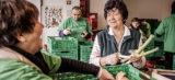 Essener Tafel nimmt wegen Andrang vorerst nur noch Deutsche auf