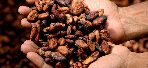 Kakao, Bohnen, Hand, Schokolade, Armut, Afrika, Bauer