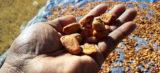 """""""Kakao bringt Bauern in der Elfenbeinküste kein Existenzminimum"""""""