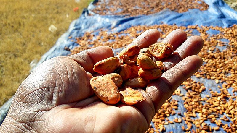 Kakao, Kakaobohnen, Hand, Armut, Afrika